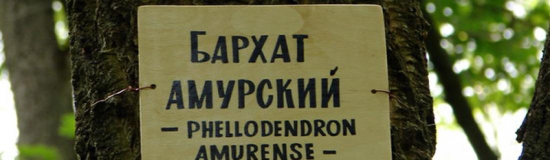 Пробковые полы (бархата амурского)