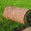 Рулонные газоны: выбор, уход и укладка рулонного газона