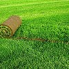 Преимущества рулонного газона