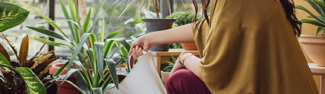 5 растений, которые улучшают энергетику в доме