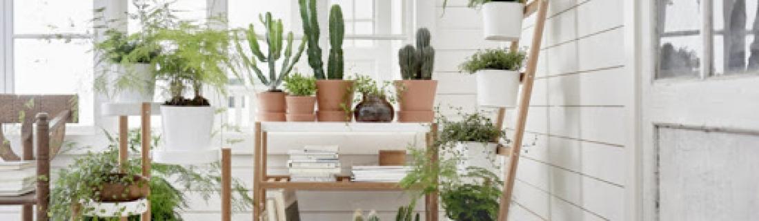 Меняем пространство с помощью растений
