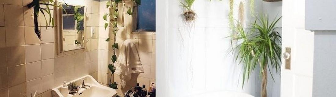 Растения, идеально подходящие для ванной