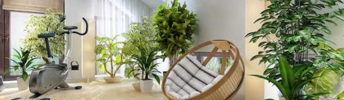 Комнатные растения, подходящие к любому интерьеру