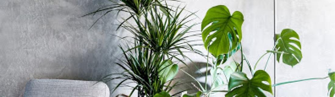 Список полезных и опасных растений для дома