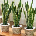 Полезные и опасные растения для дома